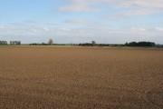 A Tidy Field
