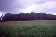Benhall Wood