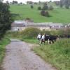 Sycamore Farm, Hopton