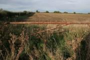 Farmland on Moor Lane