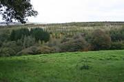 Plantation Woodland