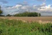 Towards A Small Plantation