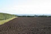 Seeded field near Bingham