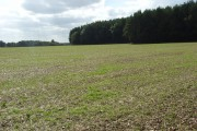 Farmland and plantation, Membury