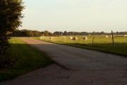 Grazing sheep at Little Manwood Farm