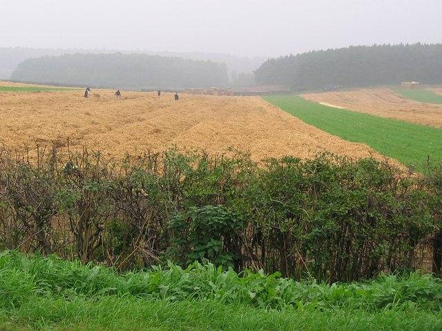 Fields on the Thoresby Estate