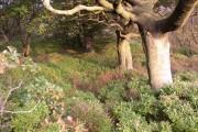 Wood near Pike Law Quarry, Saddleworth Road, Barkisland