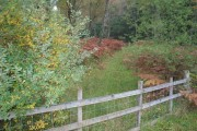 Woodland track near Bohespic.