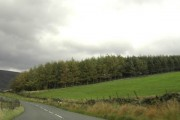 Wood by the B6105 Woodhead Road