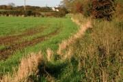 Ottringham Ings and Westlands Plantation
