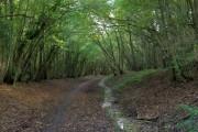 Cuckoo Trail, Cowden Wood