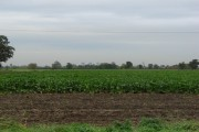 Farmland, looking south from Cherry Tree Farm, Balne