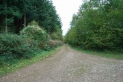Track into Hope Wood