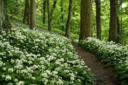 Footpath through woods, Colden Clough