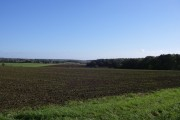 Little Hales wood and fields - Ashdon