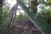 Whalebone wood