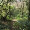 Woodland path above Bonsall