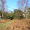 Bridleway near Hankley Farm