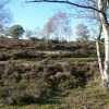 Heathland on Yagden Hill