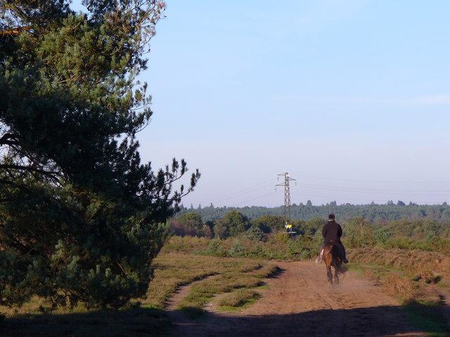 Horserider on Hankley Common