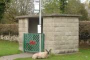 Sheep at bus shelter