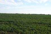 Farmland south of A354
