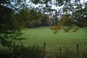 Hayton Lane End Woods..