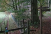 Woodland Walk through Hayton Town Head Woods