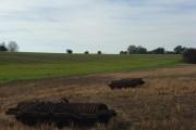 Farmland, Chute Standen