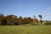 Woodland near Icklingham