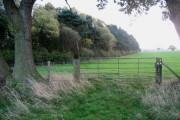 Woods on Whipley Moor