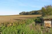 Farmland north of Cranborne Dorset