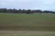 Farmland next to Martin Down