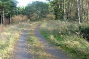 Track Through Kinlea Wood
