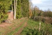 Woodland path near Sapey Common