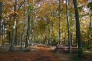 Marmansgrave Wood