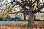 West Leake Church Lych Gate & Chestnut Tree