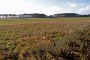 Farmland near Smithstown Wood