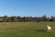 Pastures, Bentley
