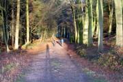 Primrosehill Wood