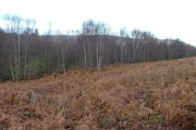 Mixed Woodland at Newtown