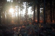 Sunset in Athelstans Wood