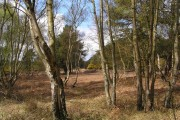 Woodland near Theberton