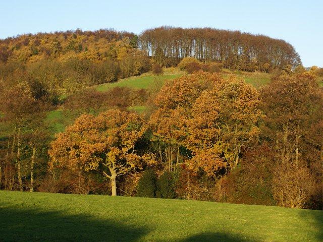 Farnah green in derbyshire yourlocalweb for Handley wood