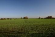 Farmland at Button's Green
