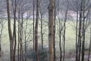 Tweedside woods