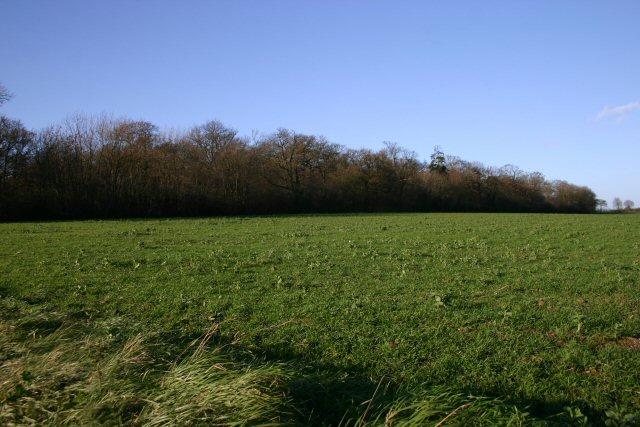 Rede Wood, Henley