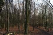 Kings Wood.