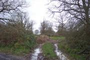 Track into Tank Wood
