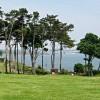 Trees on Roundham Head